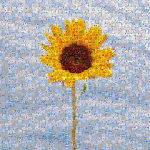 Mozaiq, crear una imagen mosaico de una foto o imagen