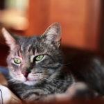 Famosos gatos de Internet explican los usos de las Redes Sociales #vídeo