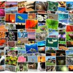 Razones para usar imágenes en un blog y en las redes sociales